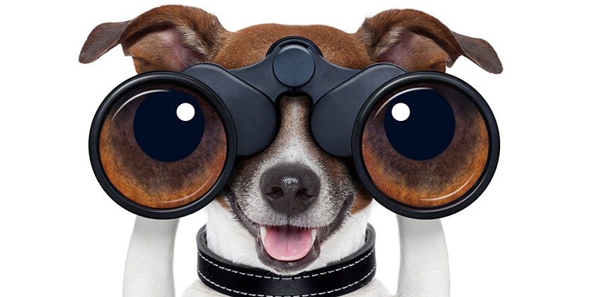 Hund med kikare